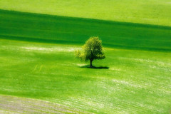 Forty Shades of Green photo by tochis