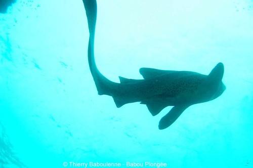 Requins &Raies