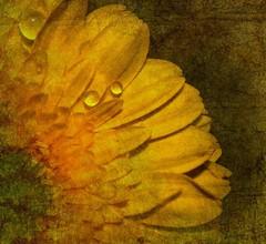 Yellow Sensation photo by -Delphine -