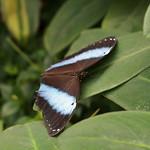 Pretty butterfly<br/>15 Feb 2009