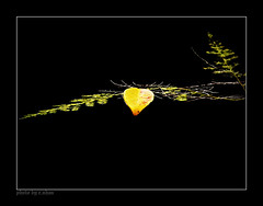 lonely leaf #2 [explored] photo by e.nhan