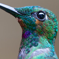 Bird Macro! photo by no1chrism