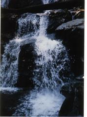 virginia 1996 20