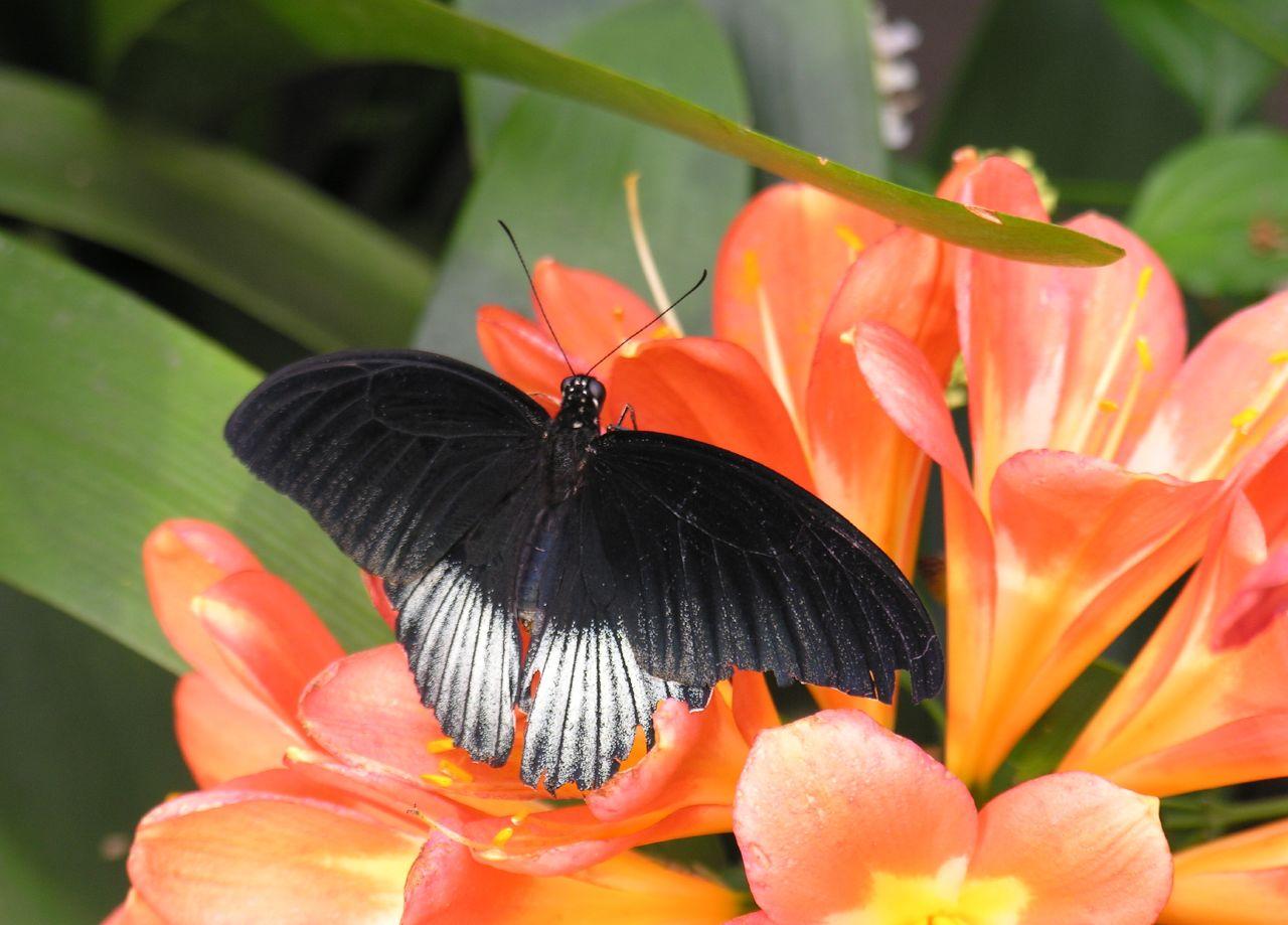 Black on orange II