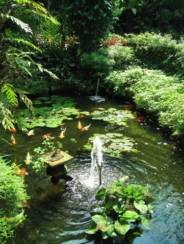 Koi Pond and Fountain