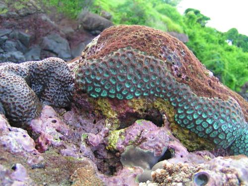 coralgarden (26)