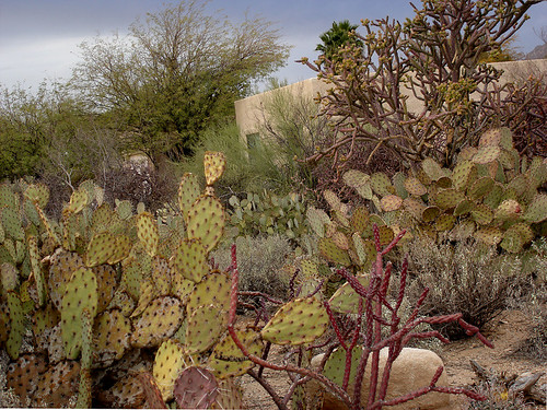 Tucson house 1 garden