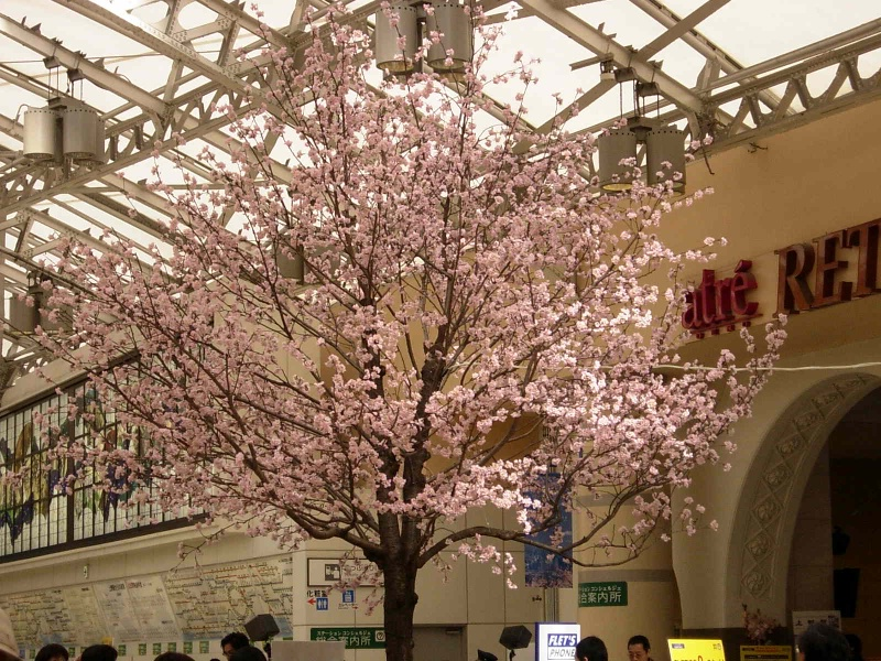 Sakura tree in a middle of a station. No problem.