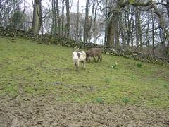 Some Donkeys