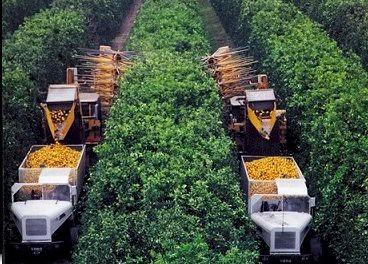 citrus_harvester