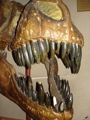 T-Rex by merfam
