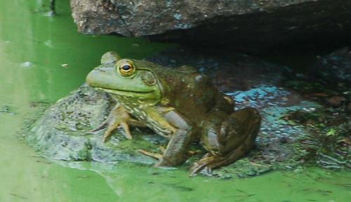 algae pond