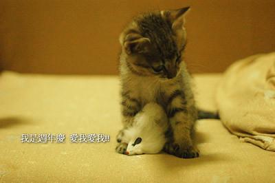 http://static.flickr.com/34/64069271_f50276c6b0.jpg
