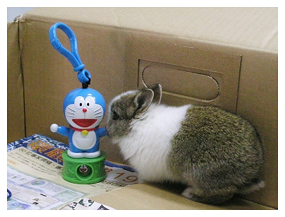 約克夏日記_20051116_大頭貍貓XD
