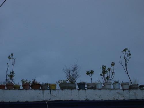 plants sky