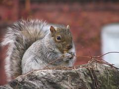 WPI Squirrel