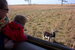 Celeste spies a blackbuck