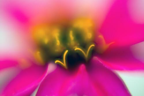 Flower V Dance