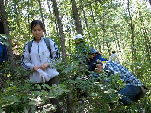 shixi-grade2002-ecology-xiaolongmen-liaowangta-huabeiluoyesong-neiye-16-2004.5.30