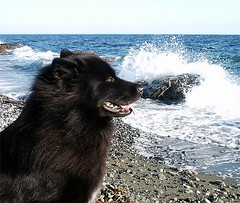 Mishka at the beach