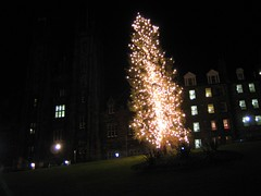 Edinburgh Christmas Tree 2005 on The Mound (3)