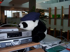 Big BBCi Panda Wears A Hat