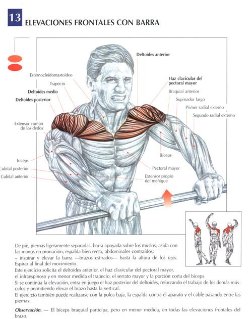 triceps23.jpg (119409 bytes)