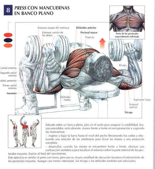 Guía de ejercicios detallada de los movimientos musculares