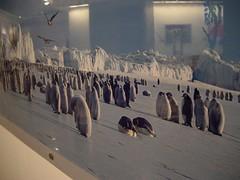 国家地理展览 换毛的企鹅