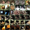 My cat mosaic