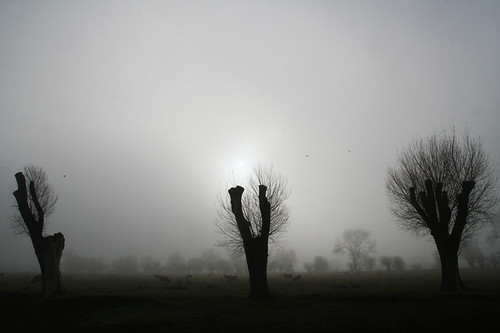 MistyField