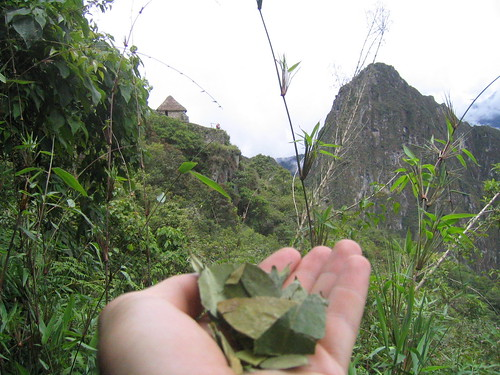 Coca leaves on Machu Pichu