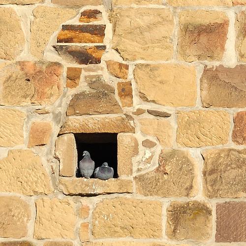 Pigeonholed!