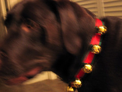 Jingle Bell Pup I
