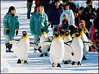 _41124314_penguins203
