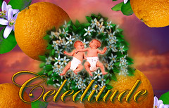 Happy Celeditude!