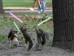 The Squirrel Force Is with Us