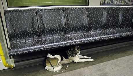 Versteck in der U-Bahn