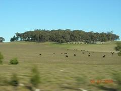 Dlm perjalanan kembali ke Melbourne dari Ballarat, Australia