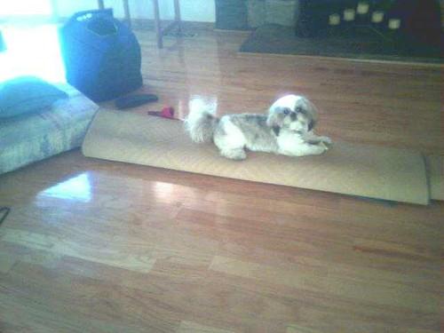 charlie on rug