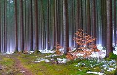 Wald photo by Claude@Munich