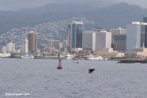 whalewatching.gif