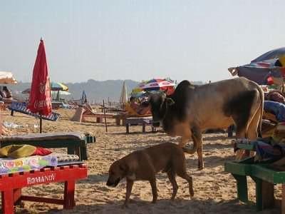 beach-goa-02