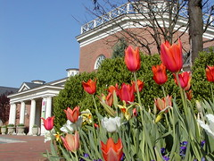 Tulips in front of Visitors Center