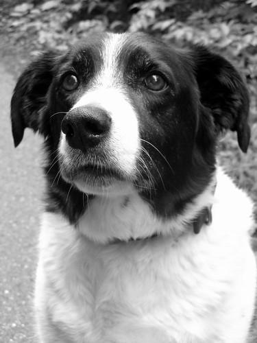 thoughtful dog