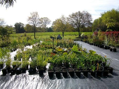 plantes exterieurs