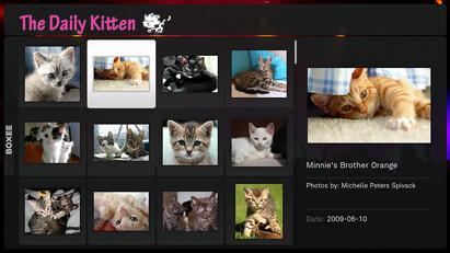 24 daily-kitten