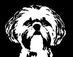 Shih Tzu Black & White Stencil Dog Art Print photo by Pupaya