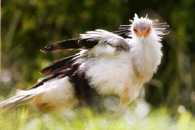 ZooBird.gif