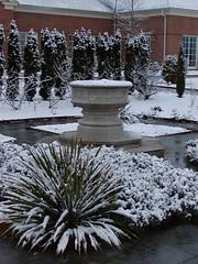 Healing Garden in Snow